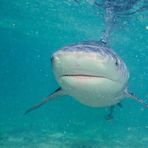 QLDer Glen Dickson Survived A Horrific Shark Attack