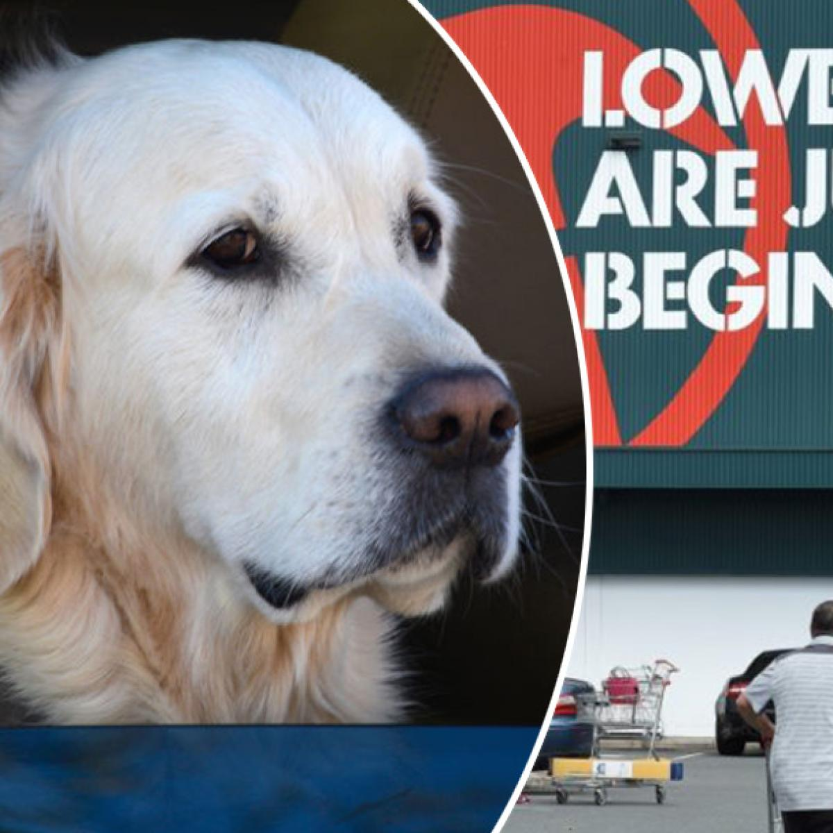 Bunnings Is Being Slammed For Its 'Pathetic' Dog Rule