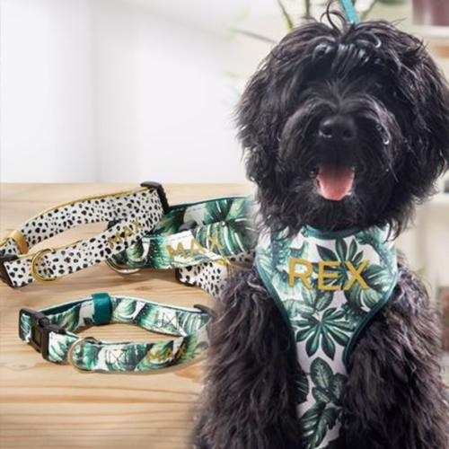 You Can Now Pimp Your Pooch With Personalised Items