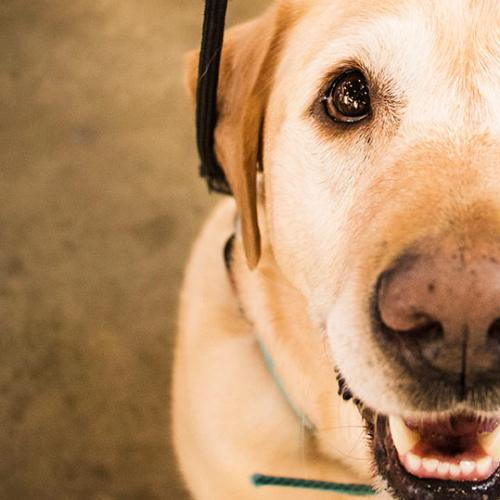 """""""My Dog Knew I Had Cancer Before I Did"""" - SuperHero Pet Stories"""