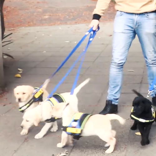 WOW!! What Happens If You Walk The Street With Bulk Puppies?