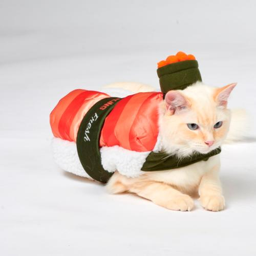 The Costumes Your Pets Need This Halloween