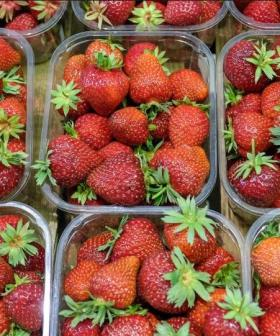 Queensland Farmers Now Offering $100,000 Per Person To Pick Strawberries!