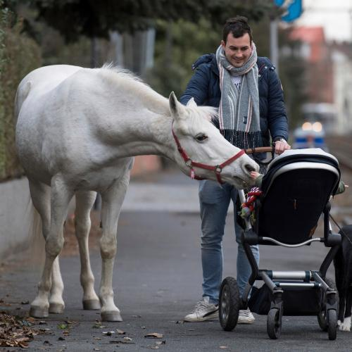 Meet Jenny, The Horse That Takes A Daily Stroll Through The City Each Morning