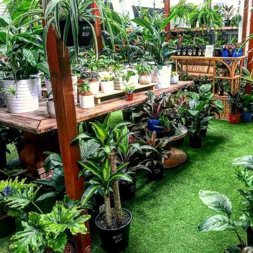 Huge North Brisbane Plant Sale This Weekend!