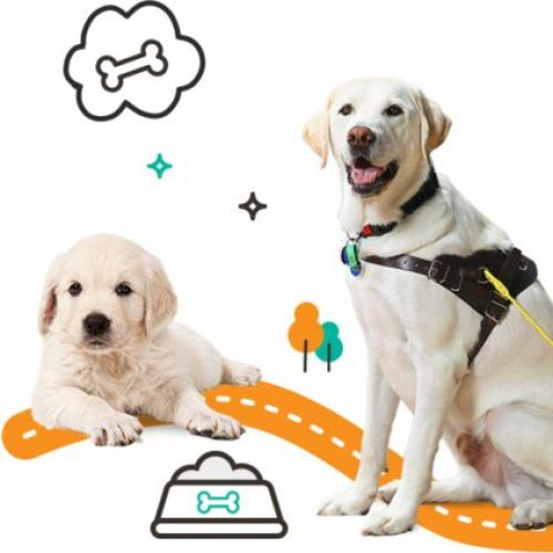 Attention Dog Lovers: Guide Dogs Queensland Need Your Help!