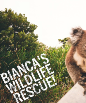 Bianca's Wildlife Rescue!