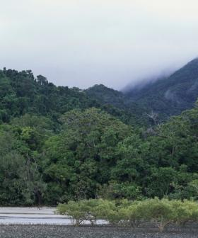 Man Found Safe After 3 Weeks Missing in QLD Daintree