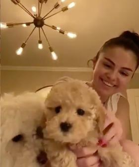 Selena Gomez And Miley Cyrus Adopted Pups During Their Self Isolation And They're Good Boys!