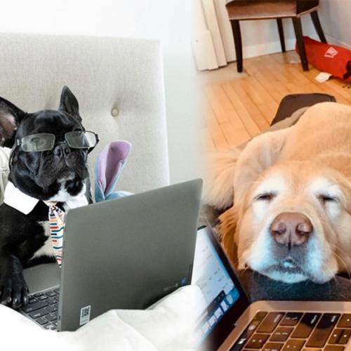 15 Things That Your Dog Is Definitely Thinking While You're Working From Home