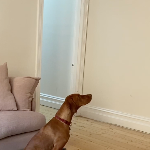 The Cute Dog Video With The Most Unexpected Ending!