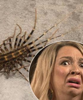 Woman Left Both Baffled And Terrified By Alien-Like Creature Found In Her Home