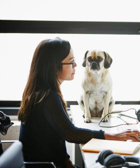 Celebrate 'Bring Your Dog to Work' Day With a Canine Co-worker This Friday