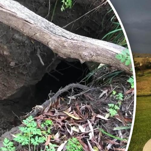 Grant Denyer Knows Location of Infamous Black Panther! And HERE Is The Plan...