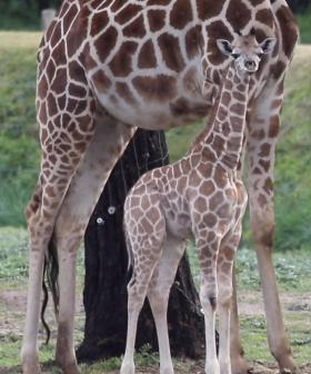 The Baby Zoo Animals GUARANTEED To Make You Smile!