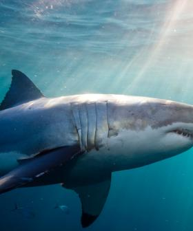 Queensland to Trial Shark Drones at Five Beaches
