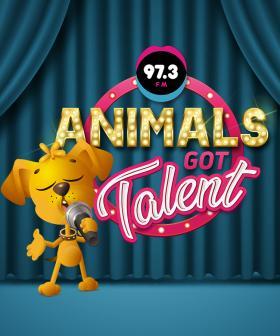 Robin Terry And Bob's Animals Got Talent