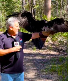 """I Survived!"" - Terry's Close Call With An Axe Catching Eagle!"