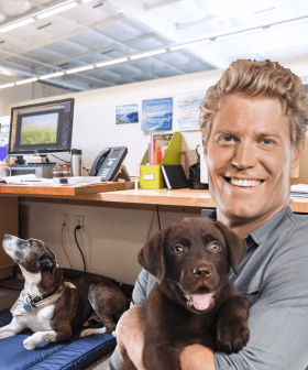 "Good News! Pets At Work Will ""Bring Happiness"", Dr Chris Brown Says!"