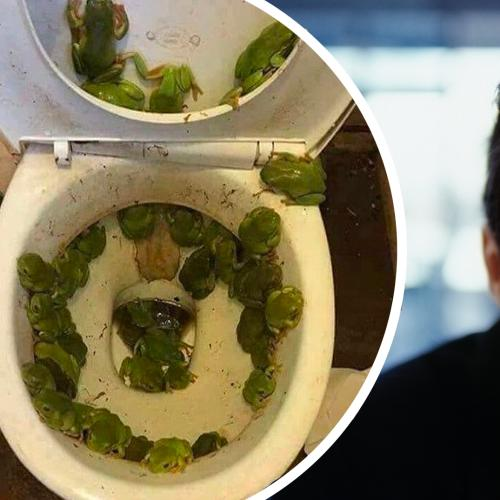 """""""Frogs In The Toilet?"""" - The Top 10 Things The Rest of The World Find Shocking About Australia!"""
