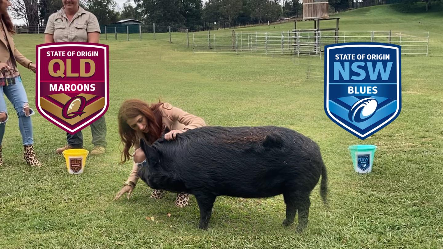 Our Very Own 'Peppa Pig' Predicts The Origin Winner For Game One!