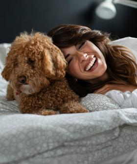Studies Show Brisbane Pet Owners Are Spending More Money On Their Pets Than They Do Themselves