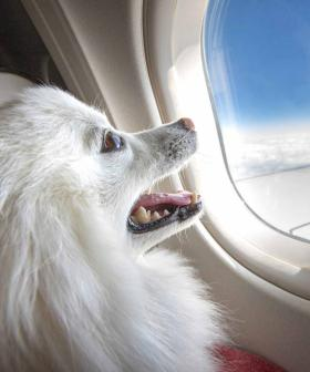 Pets Could Soon Be Allowed To Sit With Their Owners On Flights