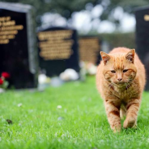 This 'Compassion Cat' Walks Itself To Cemeteries And Keeps Lonely Visitors Company