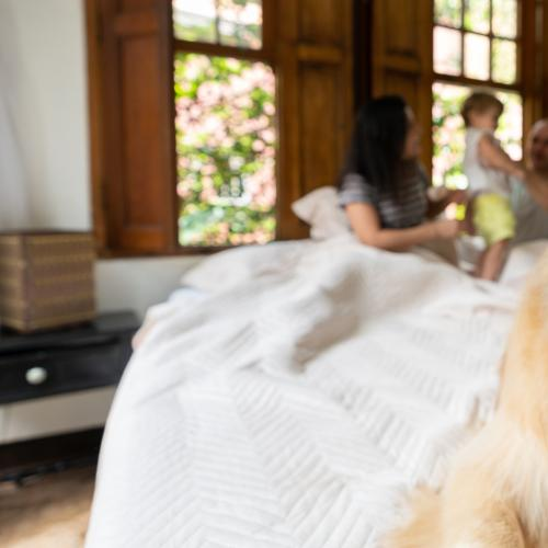 The Great Debate: Should Pets Be Allowed To Live In Rentals?