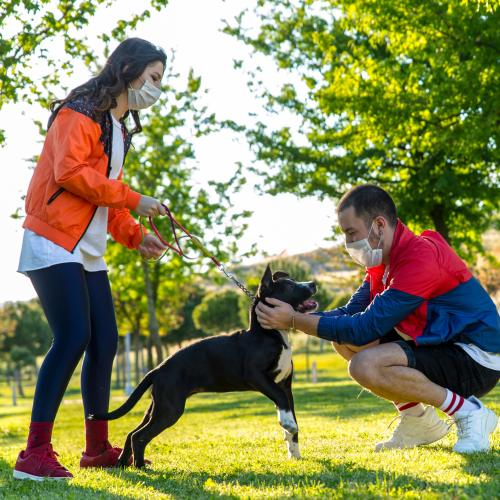 Here Are Some Tips To Help You Pick Up While Walking The Dog At The Park